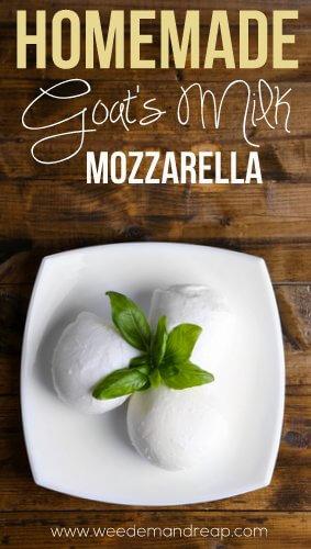 goats-milk-mozzarella