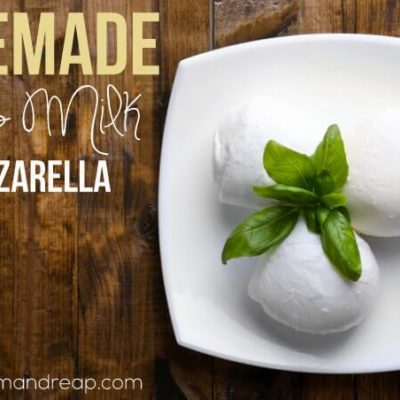 Recipe | Homemade Goat's Milk Mozzarella