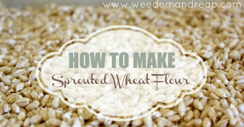 sprouted-wheat-flour1-785x523pin