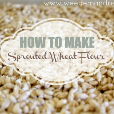 How to make Sprouted Wheat Flour