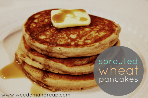 sprouted-wheat-pancakes