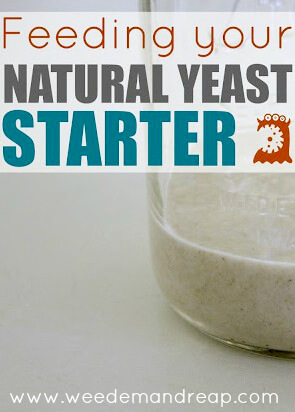 feeding-natural-yeast2-PIN