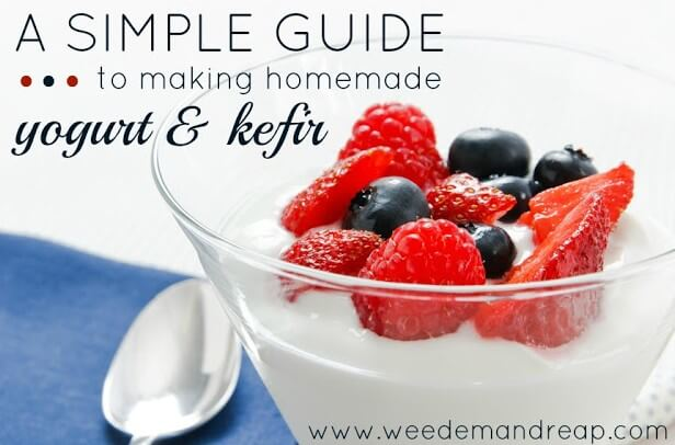 simple-guide-yogurt-kefir