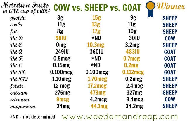 Milk Showdown Cow Vs Sheep Vs Goat Which Is Best