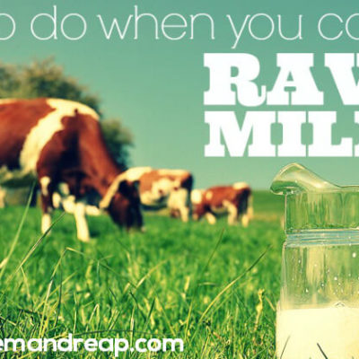 What to do when you can't find RAW MILK