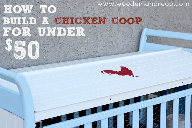 build-chicken-coop-under-50-dollars