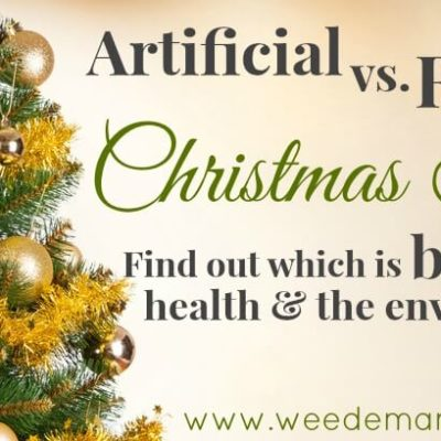 Artificial vs. Real Christmas Trees: Find out which is best