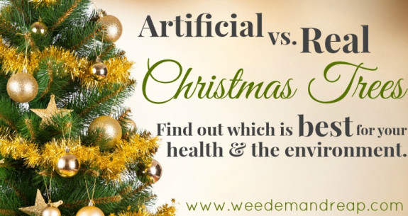 Artificial vs. Real Christmas Trees