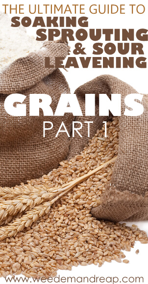 The Ultimate Guide to Soaking, Sprouting, & Sour Leavening Grains - Part 1