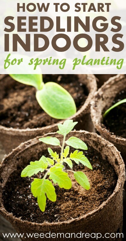How to start seedlings indoors for spring planting