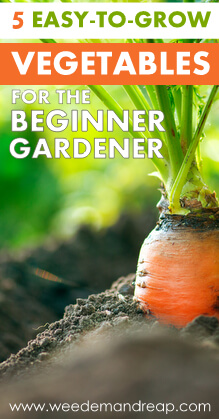 5 Easy-to-Grow Vegetables for the Beginner Gardener || Weed 'Em And Reap