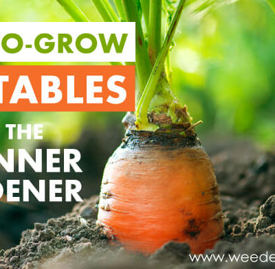 5 Easy-to-Grow Vegetables for the Beginner Gardener!