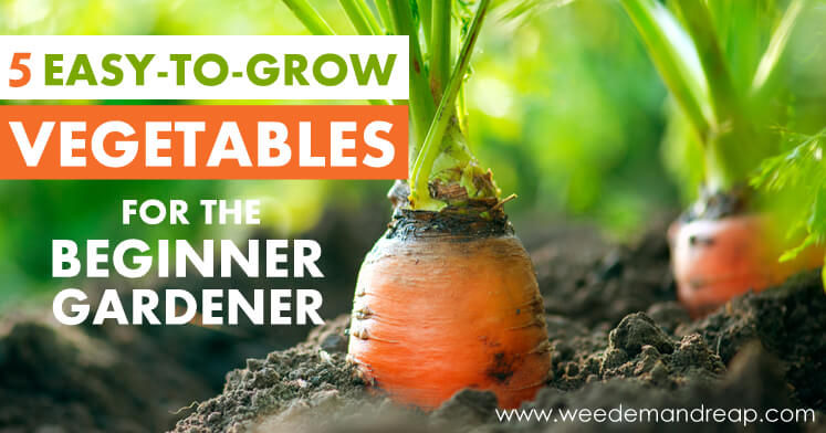 5 Easy-to-Grow Vegetables for the Beginner Gardener | Weed 'Em And Reap