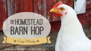 The Homestead Barn Hop!