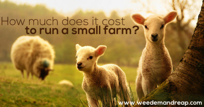 How much does it cost to run a small farm? || Weed 'Em and Reap