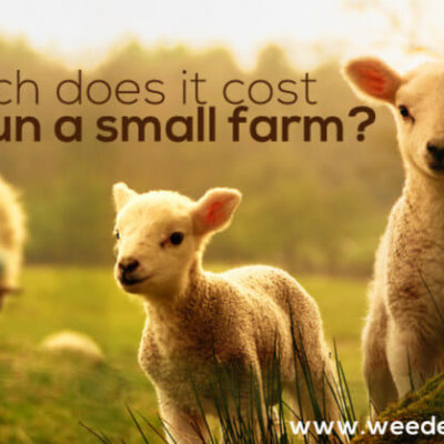 How Much Does it Cost to Run a Small Farm?