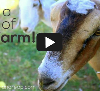 VIDEO | Take a Tour of our Farm!