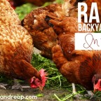 Raising Backyard Chickens in the City
