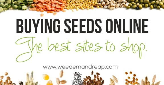 buying-seeds-online