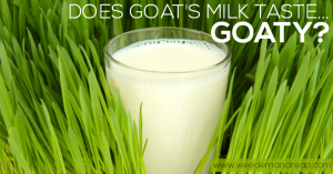 Does goat's milk taste bad?