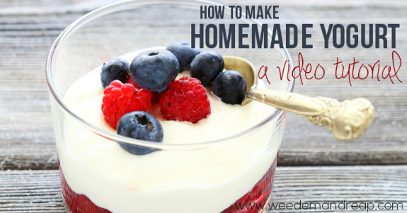 how-to-make-homemade-yogurt