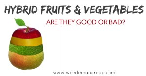 Hybrid Fruits & Vegetables good or bad