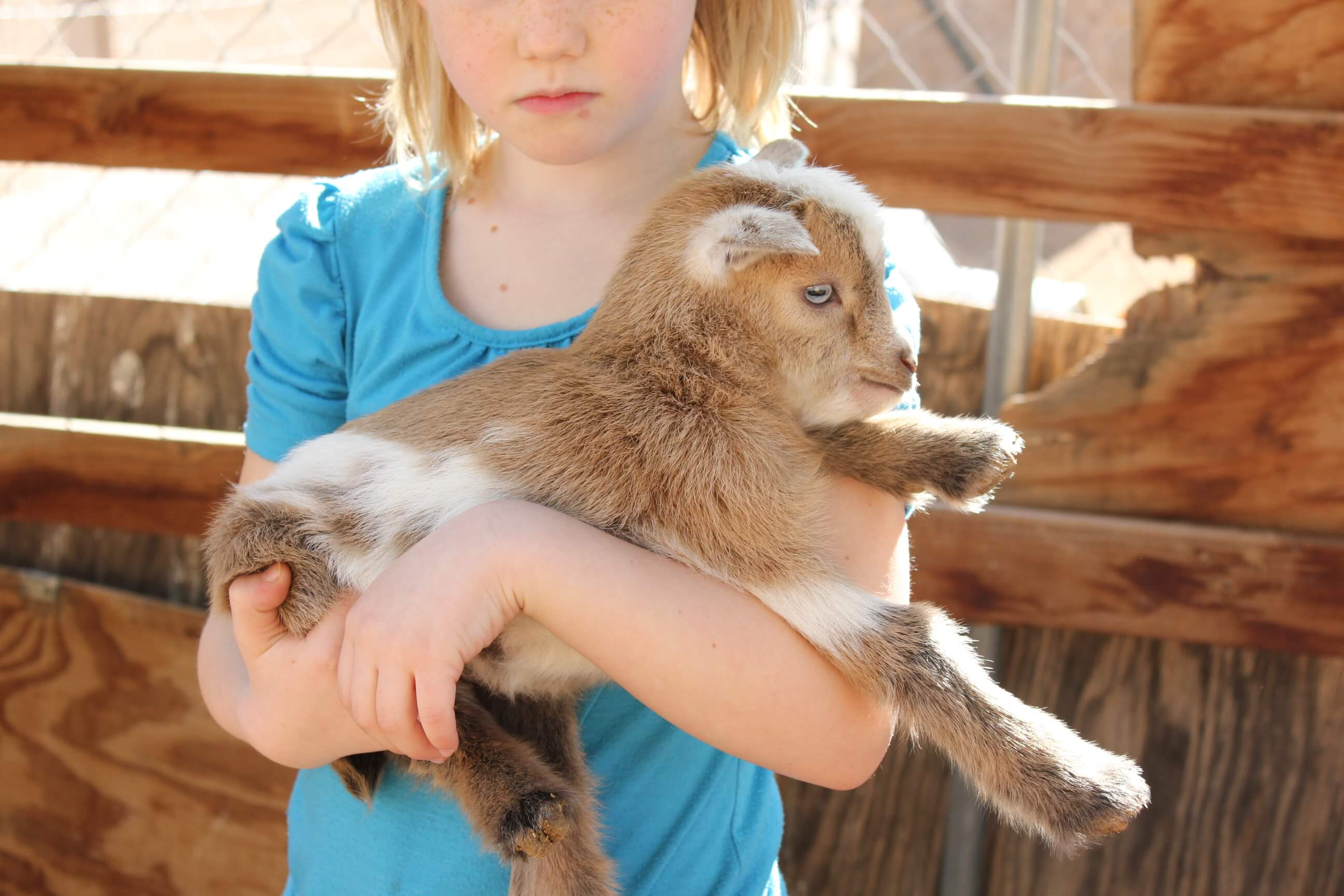 5 reasons why you need a goat