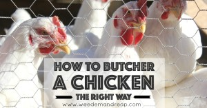 howtobutcherchicken