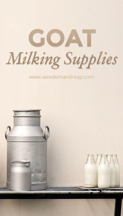 Goat Milking Supplies || Weed 'Em and Reap