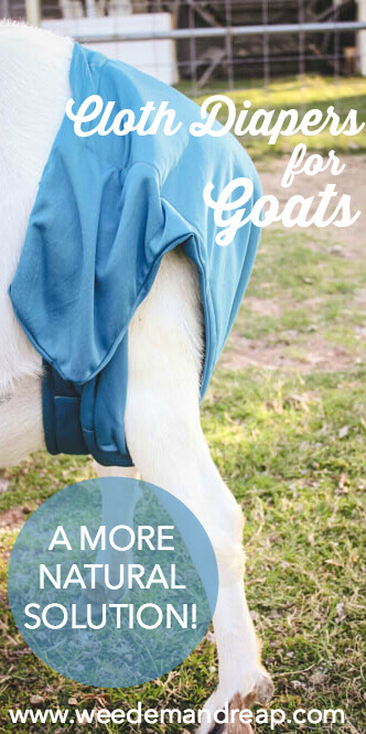 Cloth Diapers for Goats: A more natural solution | Weed 'Em and Reap