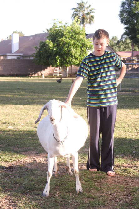 kid with pregnant white goat