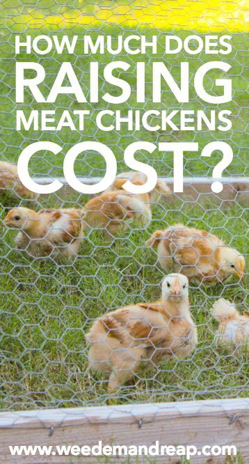 How much does raising meat chickens cost? || Weed 'Em and Reap
