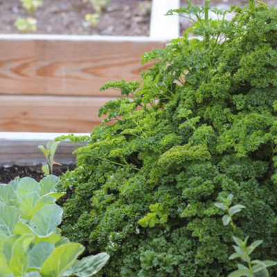 Companion Planting Made Easy Peasy