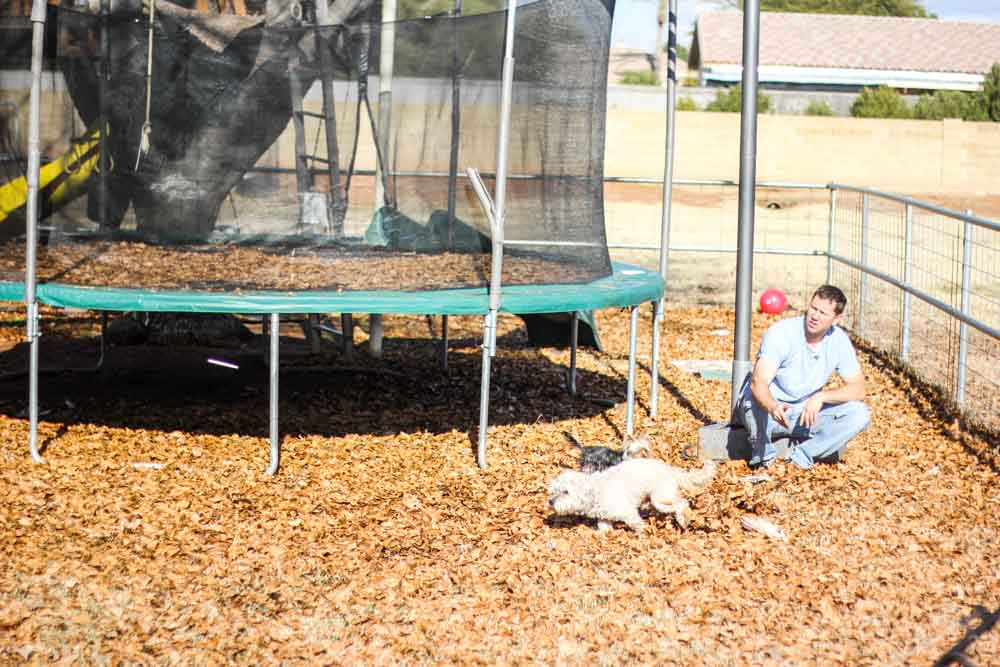 man playing with small white dog near a trampoline