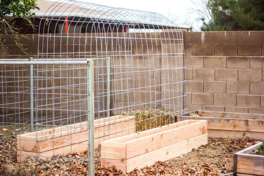 How to make a Trellis & Raised Garden Box Combo | Weed 'Em and Reap
