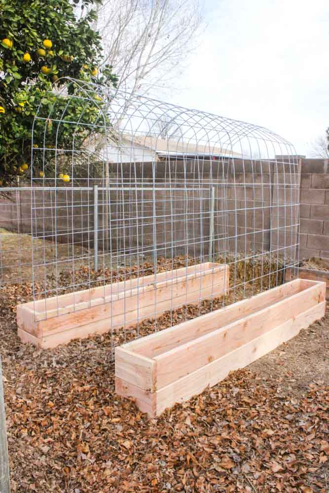 angled view of trellis with garden boxes near fruit tree