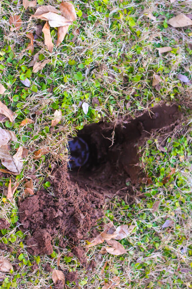 circular hole with water at the bottom in backyard covered in clover