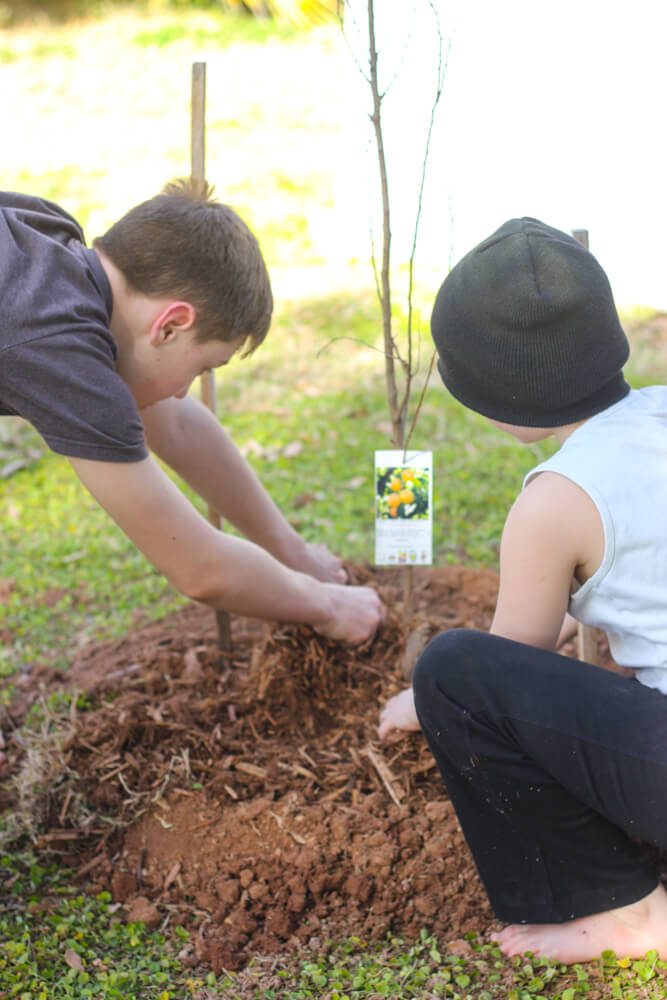 two children breaking up wood chips around a freshly planted tree