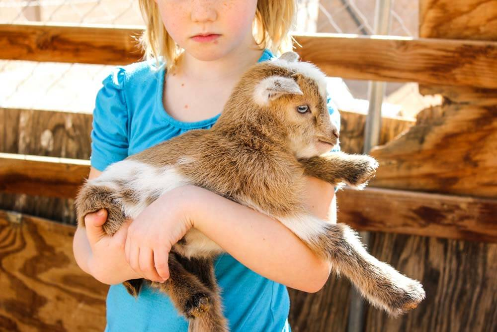 How To Care For Baby Goats | Weed 'Em and Reap