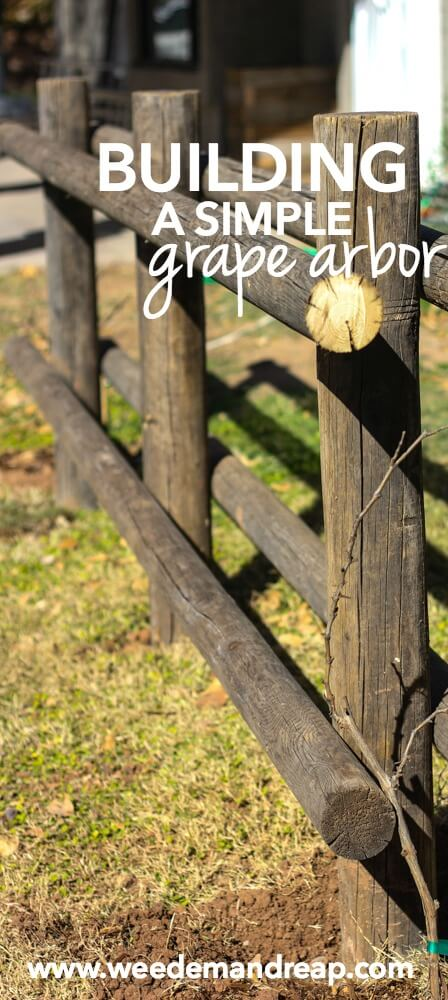Building a Simple Grape Arbor || Weed 'Em and Reap