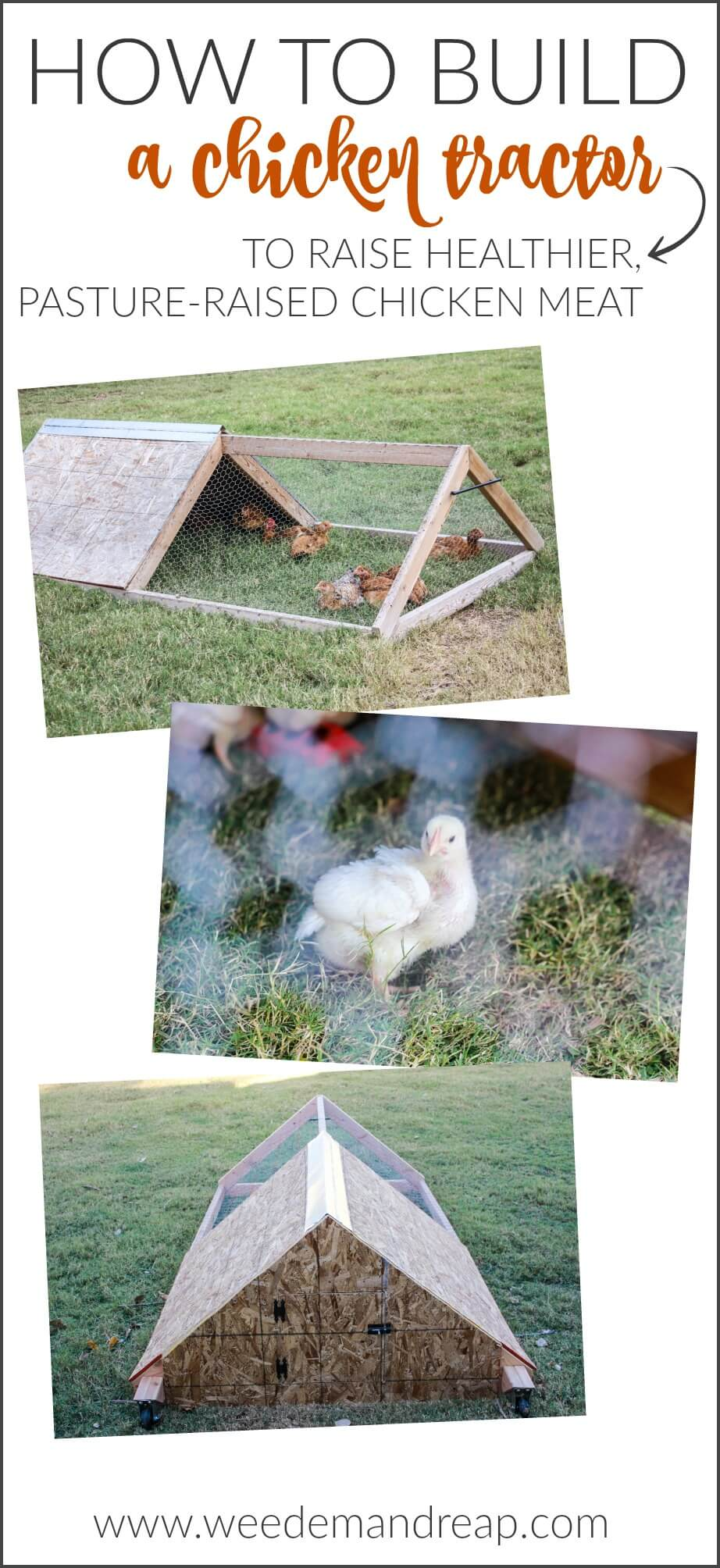 How to Build a Chicken Tractor || Weed 'Em and Reap