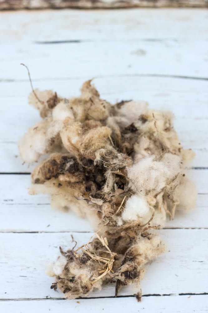 wool with dirt and hay on white painted wood