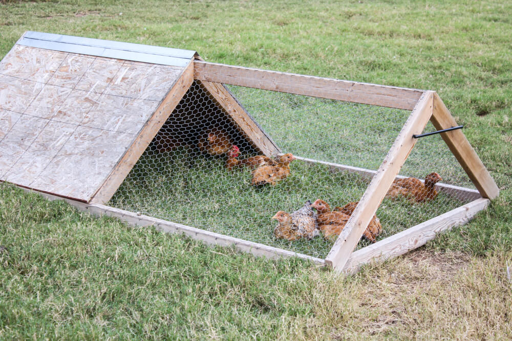 How to Build a Chicken Tractor | Weed 'Em and Reap