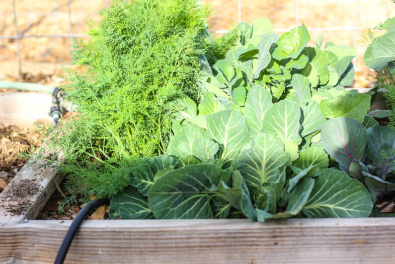 vegetables growing out of a gardening box partially covered by shade