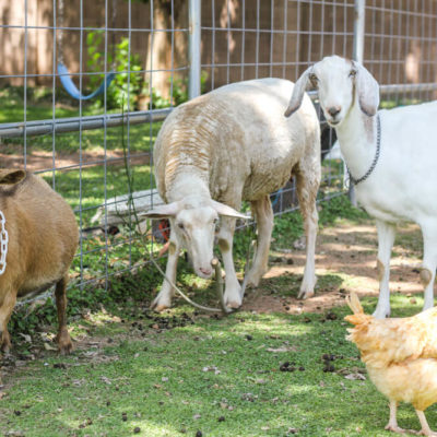How much space do you need to raise goats?