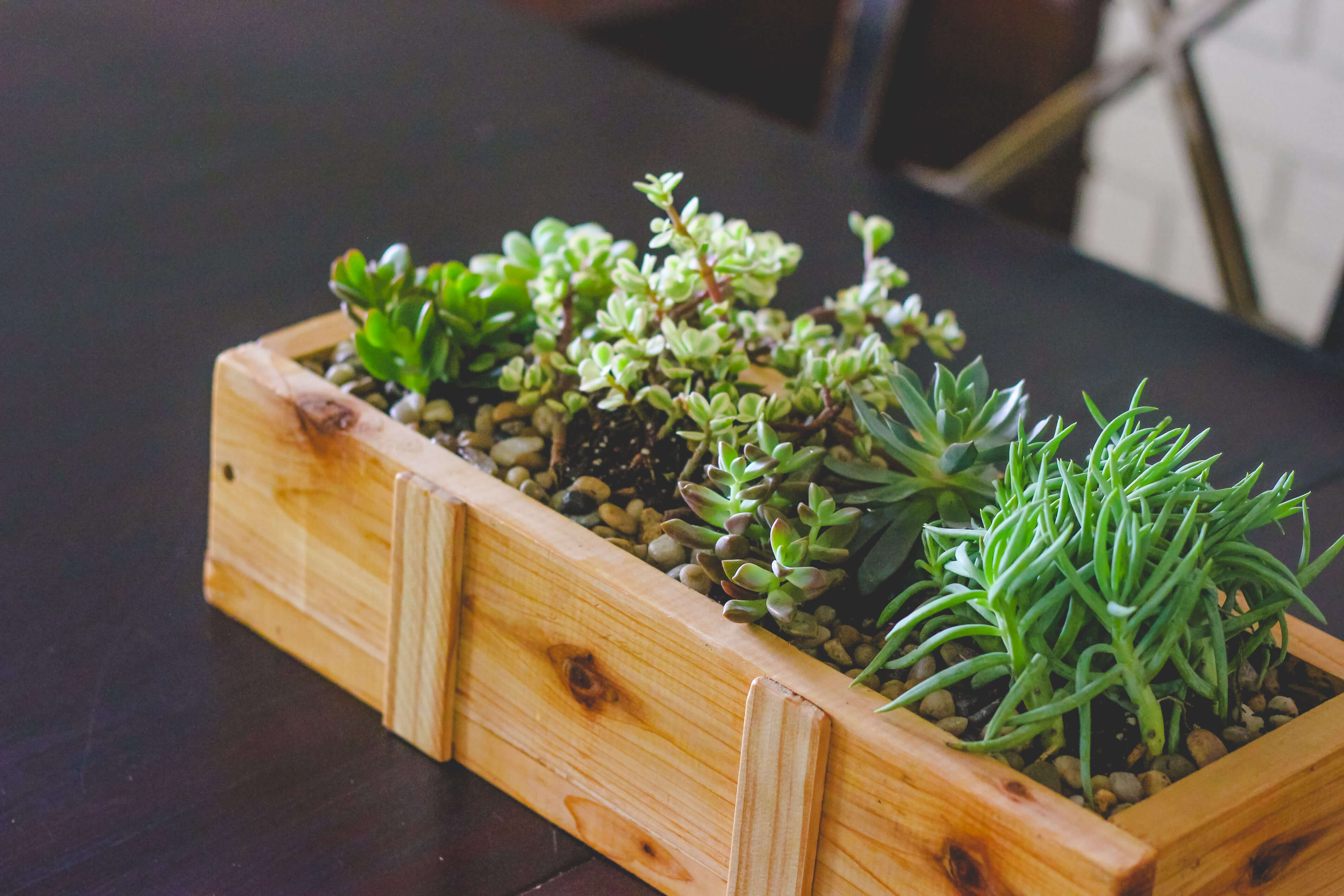 Wood pine succulent planter on table.
