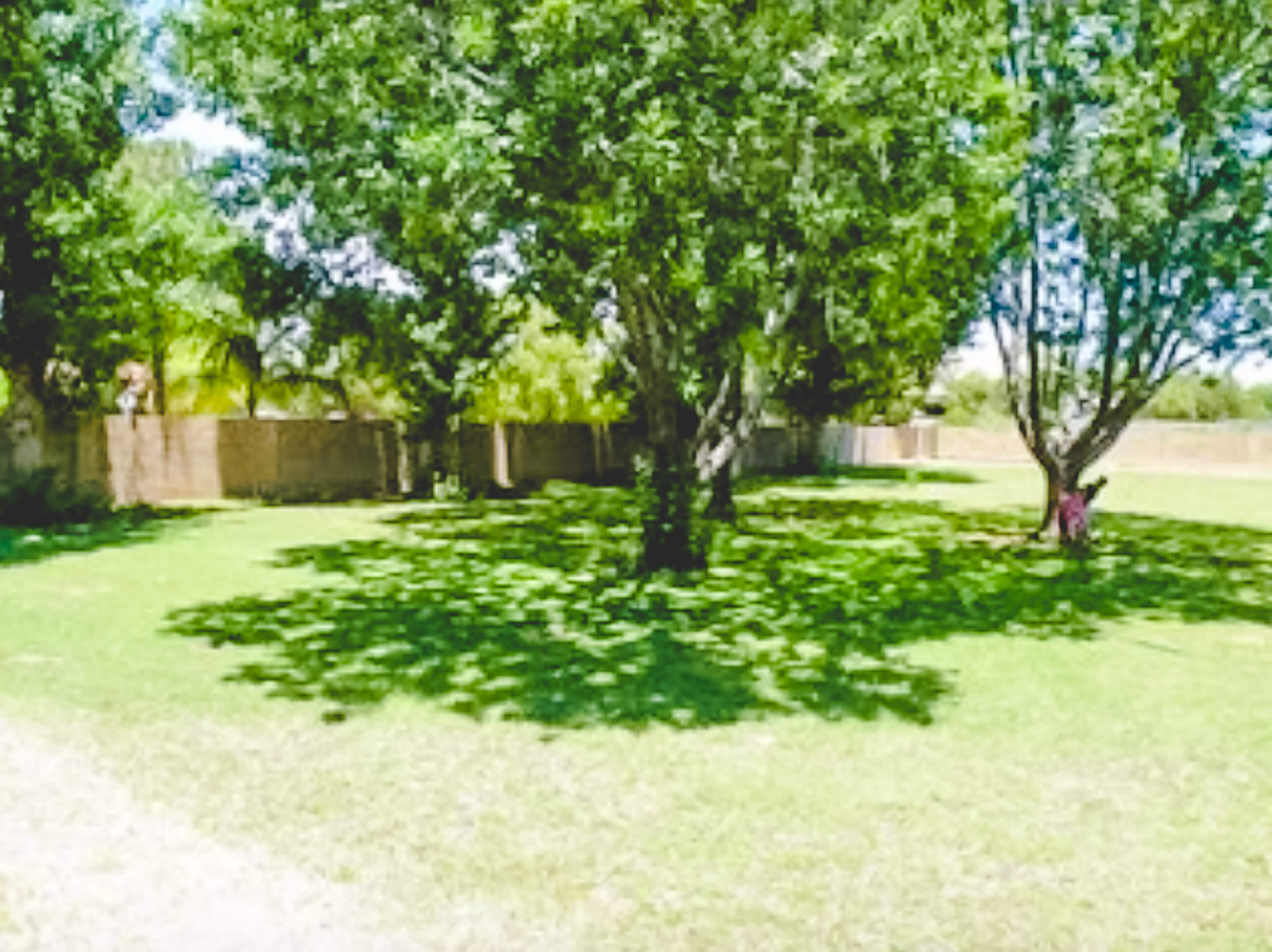 Mesquite and Cottonwood trees in large backyard.