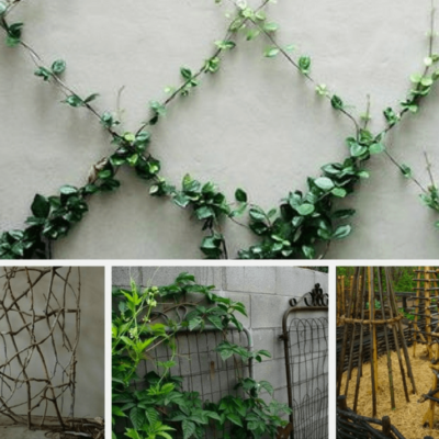 15 Simply Gorgeous Trellis Ideas