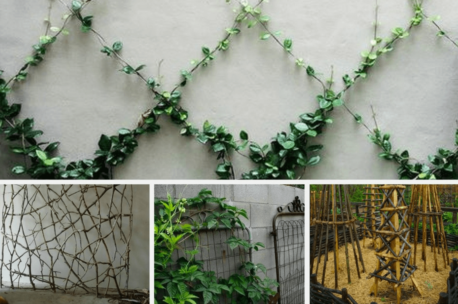 15 Unique Trellis Ideas For Your Home Rattan Garden