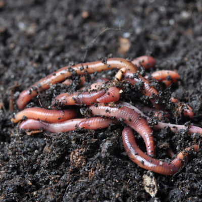 What Worm Castings can Bring to your Soil